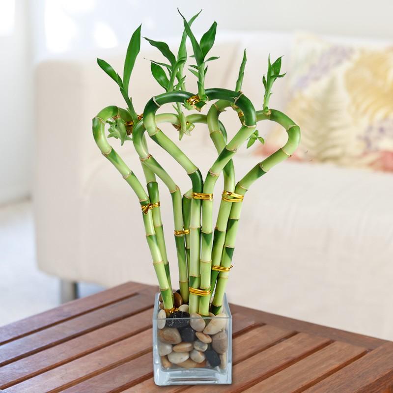 bamboo love
